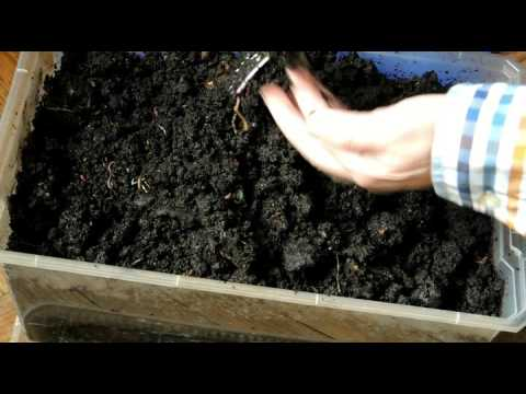 Домашнее разведение земляных червей