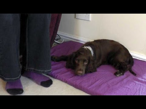 Teaching your dog to settle with Sally Marchant