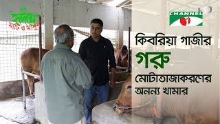 Unique beef fattening farm | কিবরিয়ার গরু মোটাতাজাকরণ খামার | Shykh Seraj | Channel i | Bangladesh