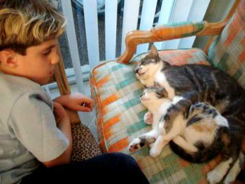 Autism Therapy Kittens 2