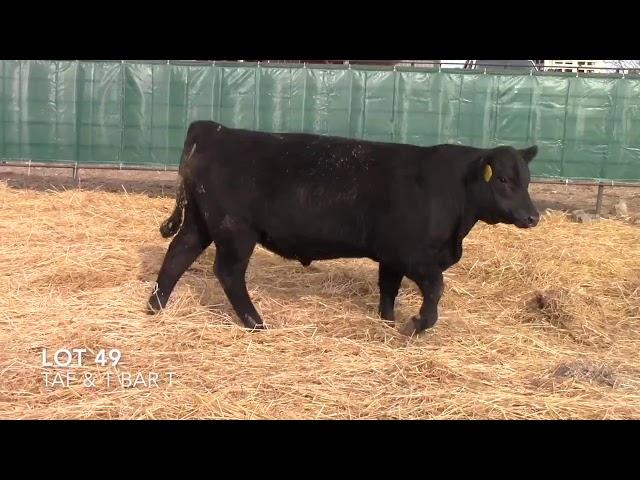 Taliaferro Angus \u0026 T Bar T Angus Ranch - 49