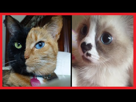 Thumbnail: 30 CATS WITH UNUSUAL MARKINGS