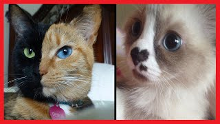 30 CATS WITH UNUSUAL MARKINGS