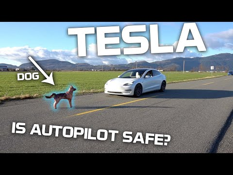 Will Tesla Autopilot hit a dog, human, or traffic cone?