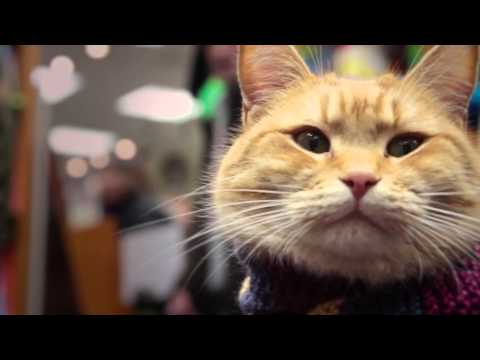 A STREET CAT NAMED BOB: Coming to America!
