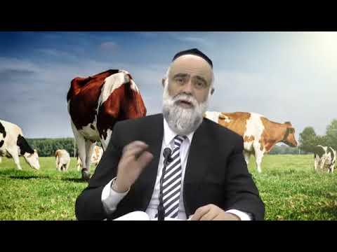פרשת שמיני - פרה - לראות בפרשת השבוע את העוצמה שבתורה - הרב משה פינטו בסרטון מיוחד