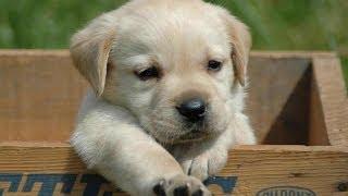 Cachorros abandonados (3min). Imagens impactantes