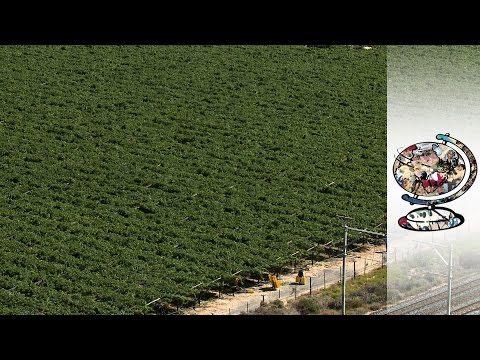 The Dark Side Of South African Vineyards (2014)
