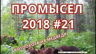 ПРОМЫСЕЛ 2018  #21 ОХОТА НА МЕДВЕДЯ , КОСУЛЮ (ФОТОЛОВУШКОЙ), И ГЛУХАРЯ.