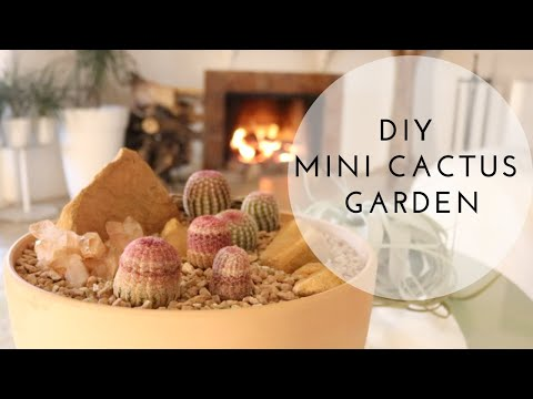 DIY Mini Cactus Garden | Arizona Rainbow Cactus