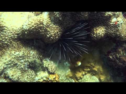 Snorkeling around Charlotteville, Tobago