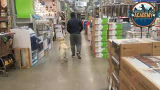 Asheville Dog Academy - Labrador Retriever Gnarly Week 2 of 3 - Dog Training in Asheville