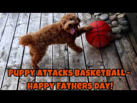 Puppy Attacks Basketball - Happy Fathers Day! - Just Gin 3: Cutest Dog Ever! VOL. 42
