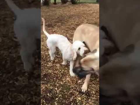 Dogs having fun at Dog Park (FUNNY VIDEO 2018)