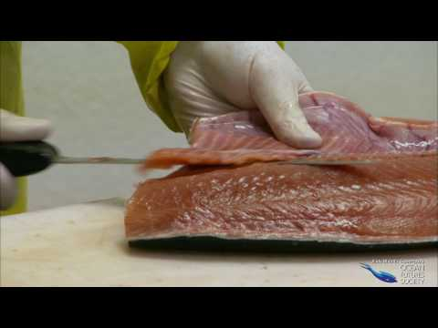 Farmed Salmon: Unhealthy and Unsustainable