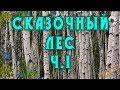 Сказочный осенний лес Ч1 Видео от Sonykpk mp3