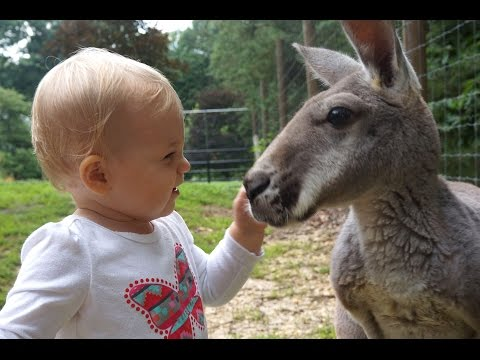 Baby and Kangaroo Are Unlikely Best Friends