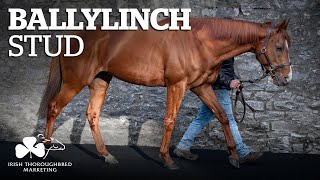 ITM Irish Stallion Showcase 2021 - Ballylinch Stud