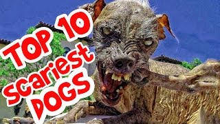 World's Top 10 Scariest Looking Dogs. Scariest dogs in the world ever.