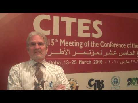 Failure to Protect Shark Species at CITES Conference in Qatar