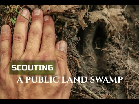 PUBLIC LAND: SCOUTING A SWAMP