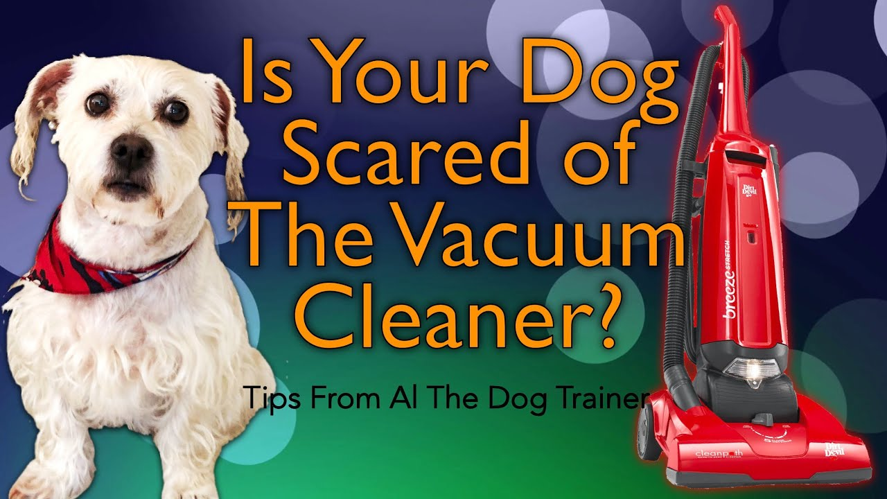 my dog is afraid of the vacuum cleaner - tips from al the dog trainer