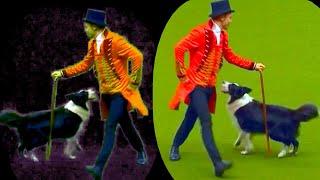 TikTok Amazing  Tricks Dogs Dancing & Music