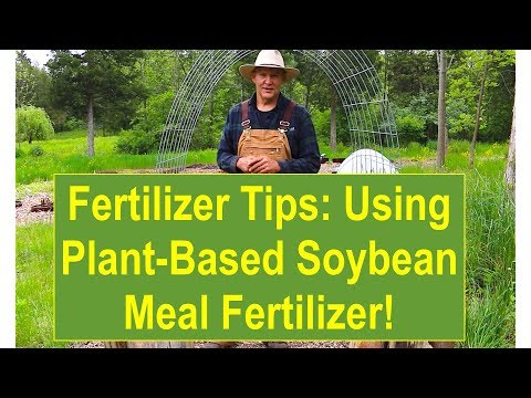 Vegan-Organic (Veganic) Fertilizer Tips: Using Plant-Based Soybean Meal Veganic Fertilizer