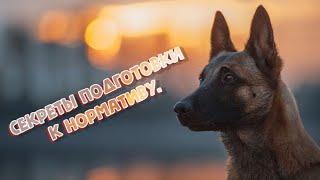059 Продолжаем раскрывать секреты подготовка собаки к ВН нормативу
