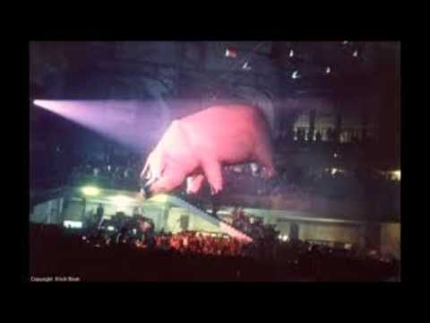 Pink Floyd LIVE ~ Money ~ Rowdy Cleveland  Show ~ Animals Tour 1977 !