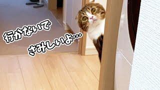 🐈飼い主に外出して欲しくない寂しがり屋な猫のアピールが可愛すぎた!