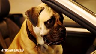 Dog - Top Gear Live Echo Arena Liverpool, February 2015