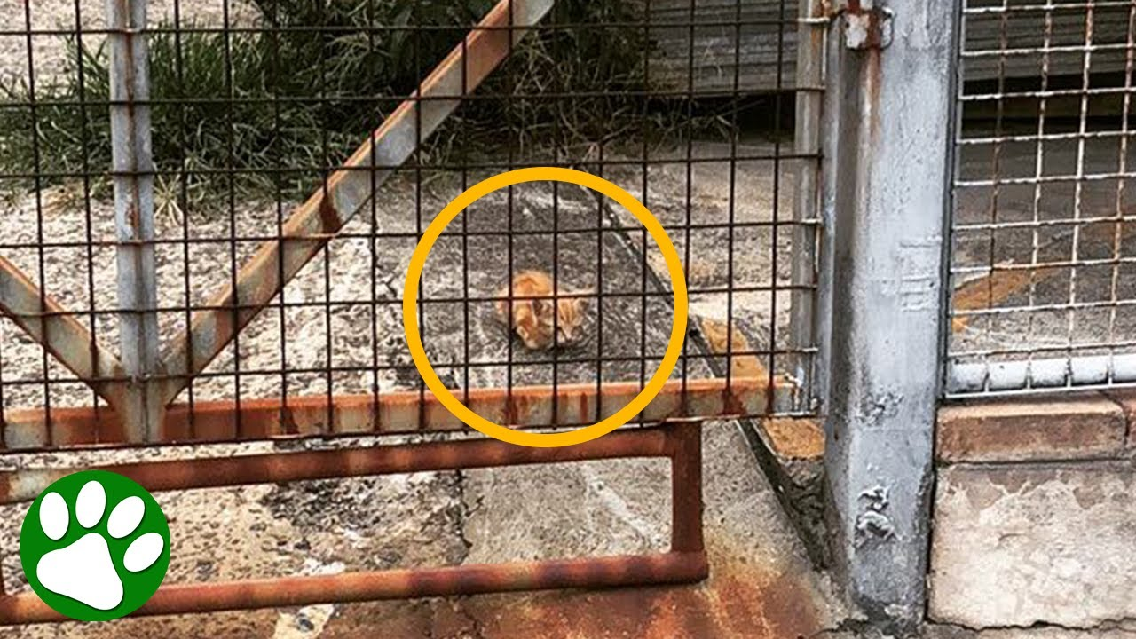 Couple spots TINY one-eyed kitten behind a fence