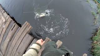 FISHING SPIDER!!! The canvases are tearing , the poles are breaking!!! WATCH UNTIL THE END!!!