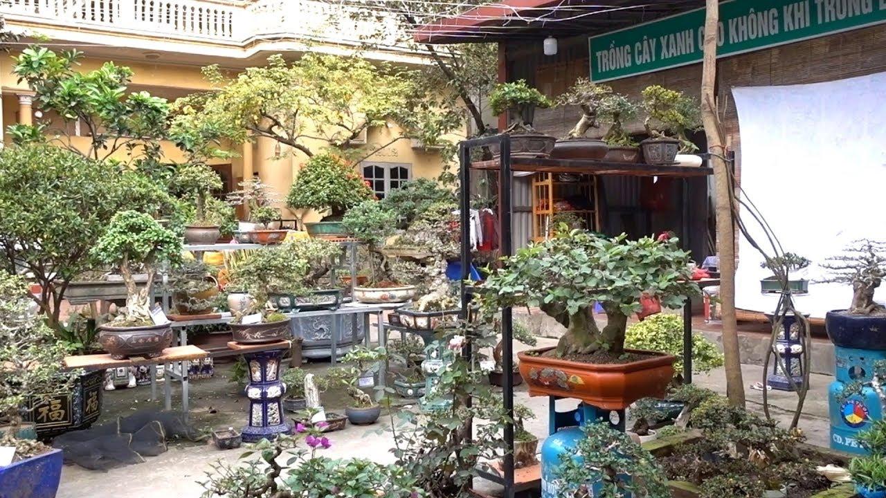 Loạt cây hàng đẹp, giá hợp lý, vận chuyển toàn quốc. selling beautiful bonsai trees