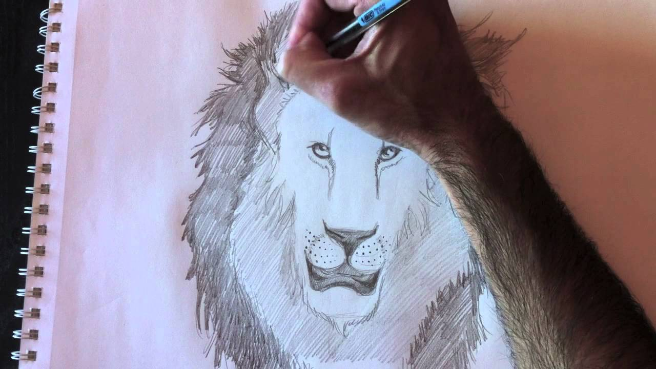 lion paolo morrone youtube
