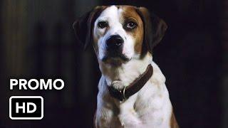 "Downward Dog (ABC) ""Bad Dog"" Promo HD"