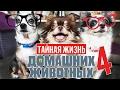 ГОВОРЯЩИЕ СОБАКИ УЧАТ СОБАКУ МИШУ ГОВОРИТЬ Таи ная жизнь домашних животных по русски 4 серия mp3