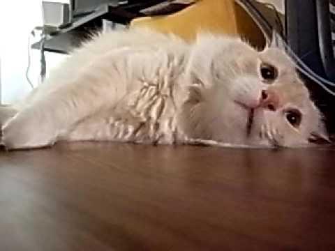 くしゃみ仕損なう猫マサオス - Y...