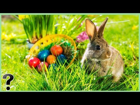 Does The Easter Bunny Exist?