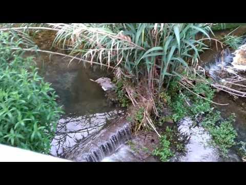 Scarico Fosso Vallelunga (Pescara): denuncia Forum H2O (6)