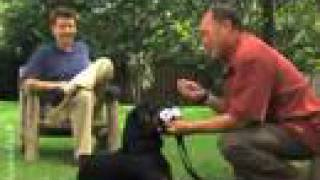 Puppy Training Video - Basic Commands (episode 7)