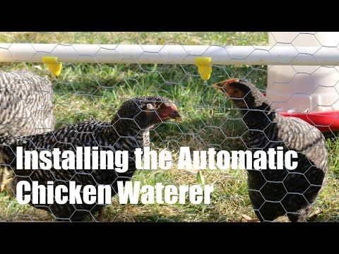 Installing Automatic Chicken Waterer