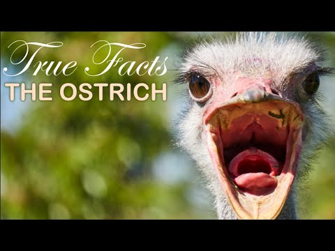 True Facts: The Ostrich