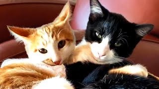 Must Watch Cat Videos! Cute and Funny Cats 🐈