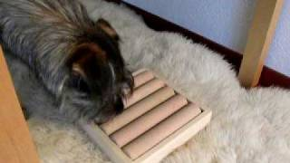 Zaunpfahl-spiel - Dog Tricks