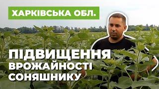 Підвищення врожайності соняшнику