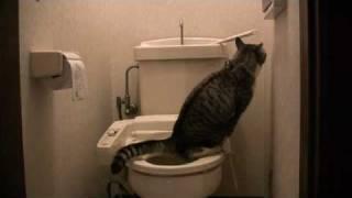 水洗トイレを使う猫の「べぎらごん」です。 ちゃんと水も流します。水洗...