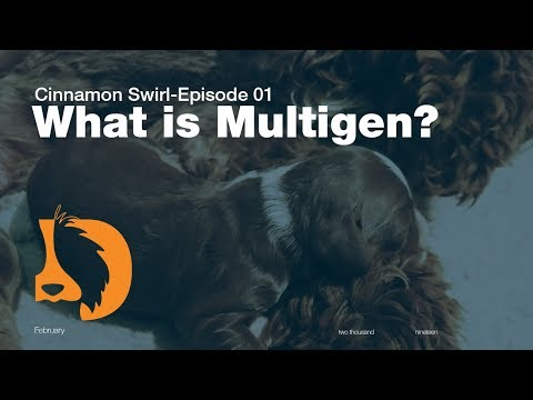 What is a Multigen Labradoodle? | Cinnamon Swirl Litter Ep01