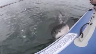 Ekstremalne Ataki zwierząt na ludzi   Woda   Extreme Animal Attack On Humans   Water